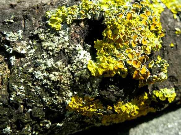Garden details 06.06.13 - 1