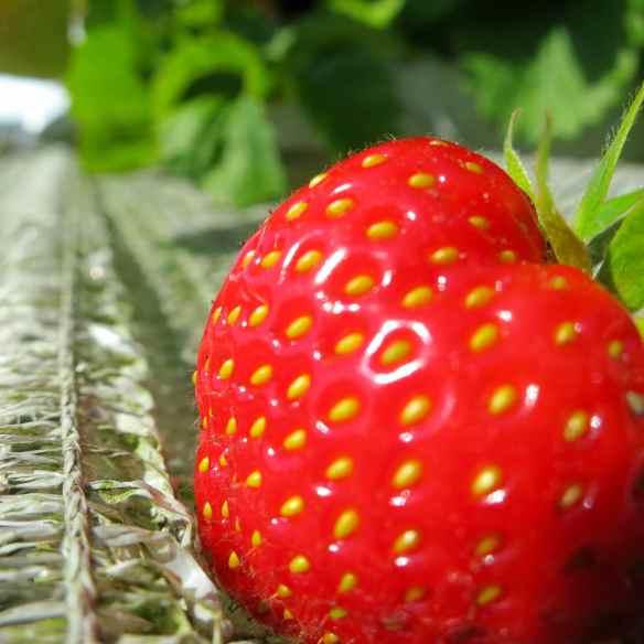 Over Farm 06.07.13 - 08