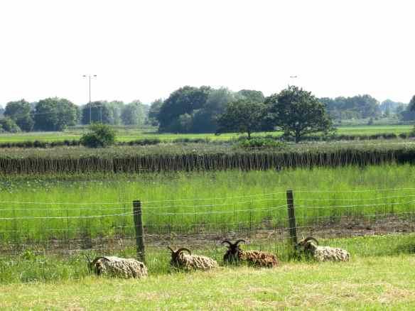 Over Farm 06.07.13 - 47