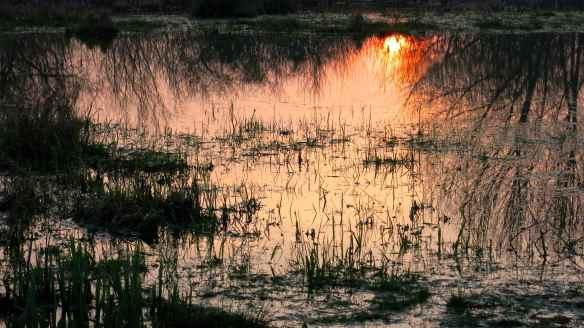 Landscape 12.03.14 - 07