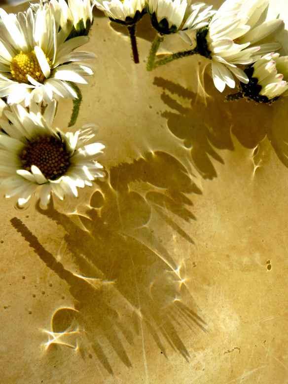 Daisy floating shadows 14.04.14 - 1