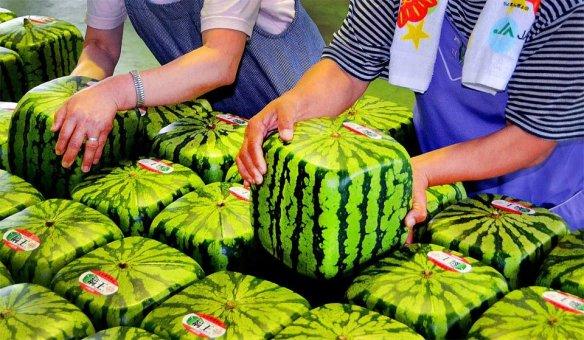 squarewatermelonJapan