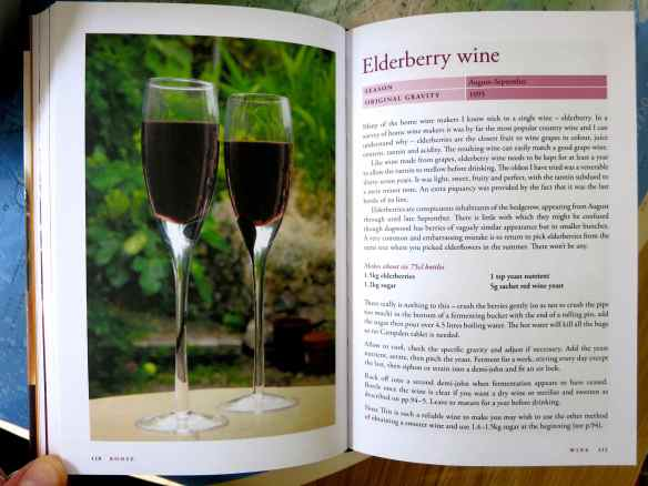 Elderberry wine 26.09.14 - 04